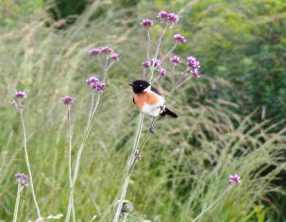 birding-gowries-top-200-things-to-do-gowrie-farm-midlands